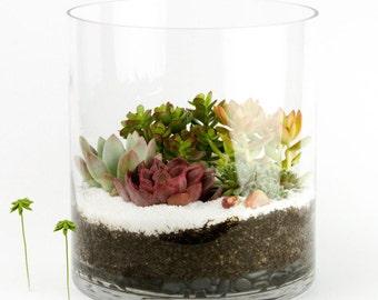 The Capitol Tower: DIY Succulent Terrarium Kit w/ Succulent Arrangement. Succulent Planter, Succulent Centerpiece, Succulent gift