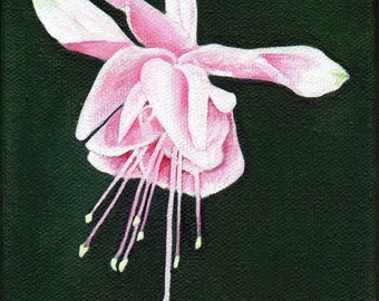 Original Fuchsia Flower Art Acrylic Painting