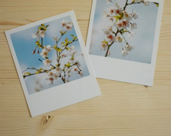 Polaroid cherry BLOSSOMS / / 2 polaroid pictures of CHERRY BLOSSOM