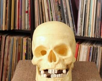 vintage human skull Halloween decor . moveable hinged jaw . realistic skull