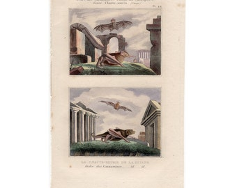 1830 ANTIQUE BAT ENGRAVING original antique hand colored print of flying bats - by Buffon Cuvier - chauve souris pipistrelle vampire