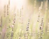 Lavender, Flower Photography, Mauve, Mint, 11x14 Print, Pastel, Purple, Baby Nursery Decor, Lavender Fields Forever