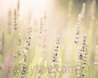 Lavender, Flower Photography, Mauve, Mint, 11x14 Print, Pastel, Purple, Baby Nursery Decor, Lavender Fields Forever