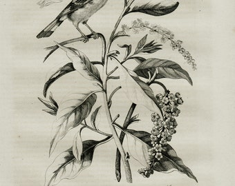 1837 Antique print of a bird in a tree branch, original antique engraving 179 years old