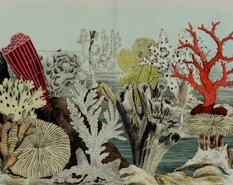 """1860 Rare Amazing Large antique CORAL REEF print, fine lithograph, Anemone, sea sponge, sea pen, 156 years old, size 17'' x 13"""" inches"""