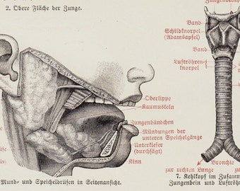 1920 Vintage ANATOMY print , face, tongue, teeth,throat,  black and red, antique medical  lithograph
