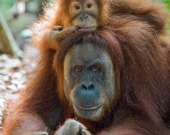 Mom and Baby Animal, Baby ORANGUTAN and Mom Photo, Baby Animals, Wildlife Photography, Safari Nursery Art, Jungle, Baby Monkey, Kids Room
