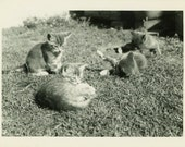 """Vintage Photo """"A Litter of Brothers"""" Kitty Cat Pet Snapshot Antique Photo Old Black & White Photograph Found Paper Ephemera Vernacular - 139"""