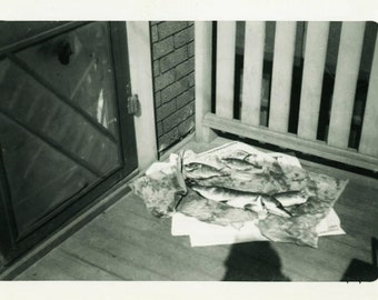 "Vintage Photo ""The Morning's Catch"" Snapshot Photo Old Antique Photo Black & White Photograph Found Photo Paper Ephemera Vernacular - 186"