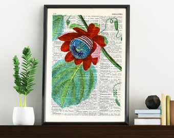 Summer Sale Vintage Book Print Dictionary or Encyclopedia Page Print-  Passiflora Passion Flower on Vintage Bookart art BFL132