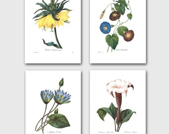 Botanical Print Set of 4, Exotic Home Decor (Redoute Flower Wall Art) --- Angels Trumpet, Water Lily, Morning Glory, Imperial Crown