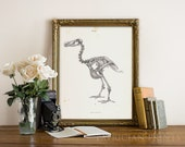 DODO Bird Skeleton Art Print Poster Scientific Chalkboard Antique Illustration Extinct Animal Dinosaur Poster Wall Decor