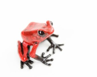 Poison dart frog - medium - red & black - Bronze