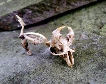 Real Animal Bone Sculpture, Baby Dragon Skeleton, Animal Specimen, Curiosity Cabinet, Halloween Bone Art, Macabre Taxidermy, Oddities, Quinn