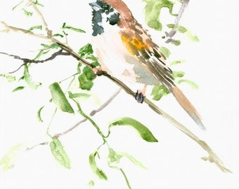 House Sparrow Male, 12 X 9 in  original watercolor painting