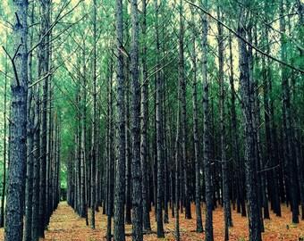 The Trees, Fine Art, Alabama Coast, Pine Trees, Forest