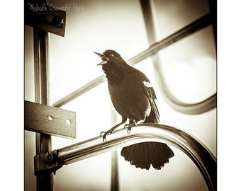 Bird Photography, Nature, Animal, Red-Winged Blackbird Photo Print