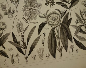 """165+ years old botanical print - lovely original 1849 antique floral poster - vintage pictures of plants and flowers flora - 9x12"""" 24x30c"""