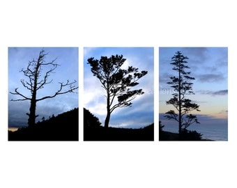 Stunning Trees Wall Decor Photo Set, Triptych Tree Photography Print Set, 3 Photo Set, Nature Prints ~ 20% Off Discounted Set, Blue Wall Art