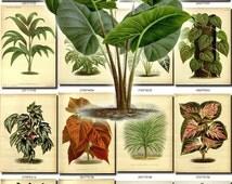 LEAVES GRASS-77 Collection of 361 vintage images vegetable botanical High resolution digital download printable herbarium flowers herb