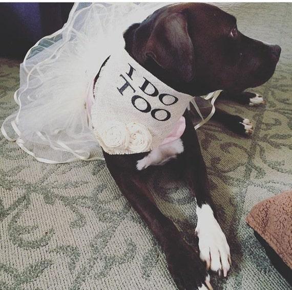 Ivory Burlap dog collar wedding