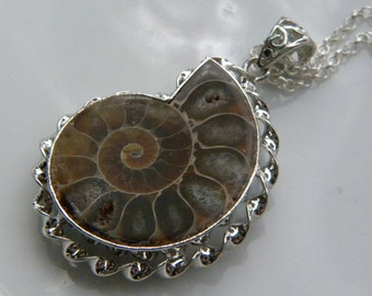 Ammonite Fossil Necklace, Fossil Necklace, Womens Necklace, Sterling Silver chain