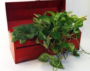 Vintage Industrial Red Metal Tool Box/Planter