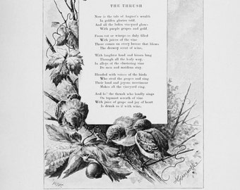 The Thrush Poem, Writing, and Illustration - Late 1800s Vintage