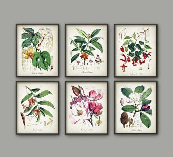 Antique Botanical Print Set Of 6 Vintage Flower Botanical