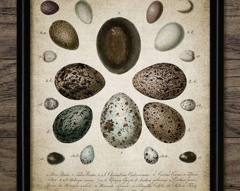 Bird Egg Print - Bird Egg Decor - Bird Watcher - Egg Chart - Bird Lover - Digital Art - Printable Art - Single Print #97 - INSTANT DOWNLOAD