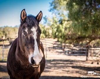 Darla Horse, Farm Animal Rescue Portrait Photography