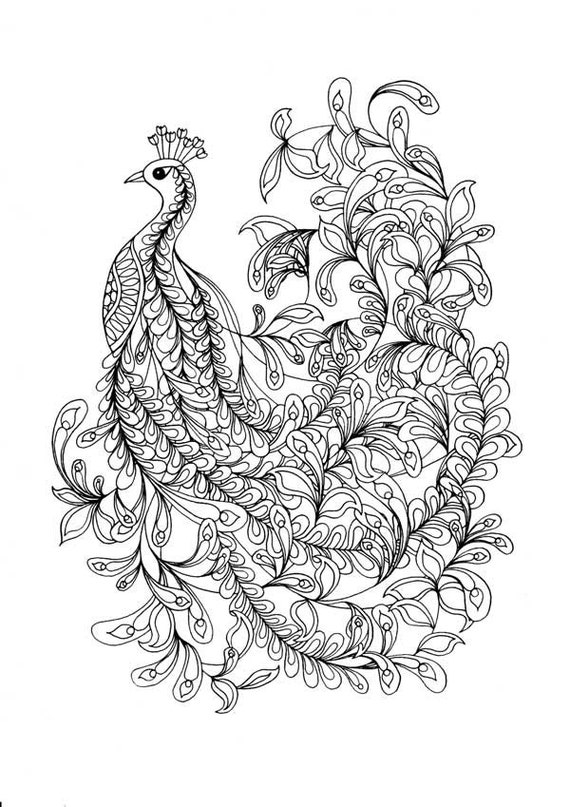 Printable Relaxation Colouring Pages : Printable Coloring Pages of a fancy Peacock line drawing. An
