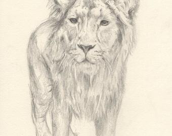 SALE Lion Walking (Original)