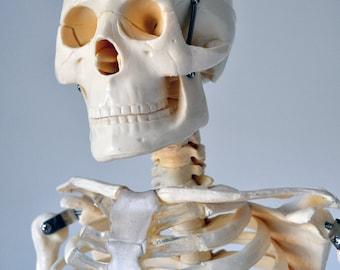 Vintage Medical Model Skeleton on Stand