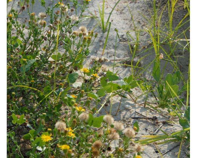 Beach Flowers Photograph