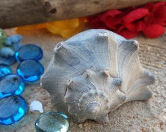 Authentic Sea Shell, Fairy Shell House, Miniatures, Dollhouse, Ocean Treasure, Fairy Accessories, Fairy Garden Supplies, Beach Decor