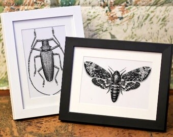 "Digital Scientific Illustrations - 6x4"" Prints, Framed or Unframed"