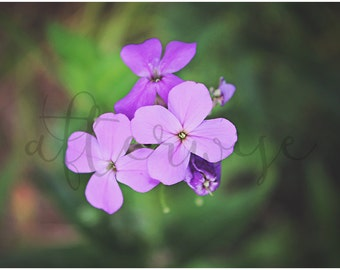 Nature Flower Photography. Nature Photography. Flower Photography. Purple Flower Photo. Botanical. Nature Print. Fine Art Photography.