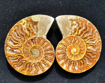 132g Natural Split pair Ammonite Fossil Specimen Shell Healing Madagascar
