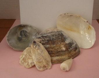 6 Different Sea Shells #37