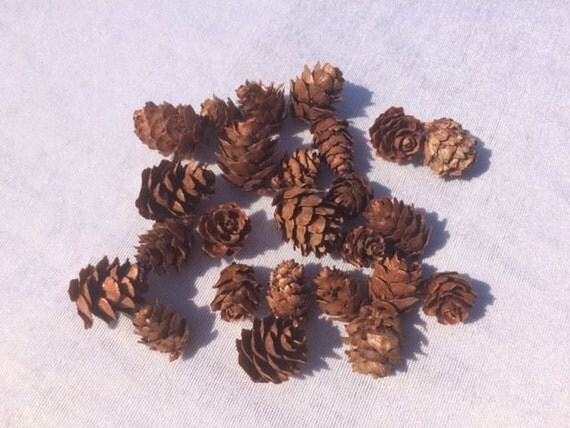 25 small pine cones craft supplies scrapbooking mini pine for Small pine cone crafts