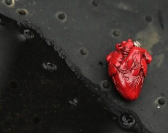 The Heart Anatomy.