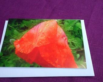 Poppy Greetings card x 3