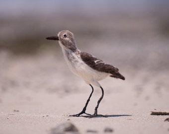 Sandpiper wool felted handmade bird