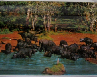 "Four Vintage Sapra Studio (Kenya) Melamine Plates, 6""x4"""