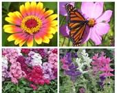 Save 50%!  BUSY BEES GARDEN Seed Kit - 4 Flowers -Zinnia Whirligig, Cosmos, Matthiola, Salvia - EcoFriendly, Organic Flower Seeds