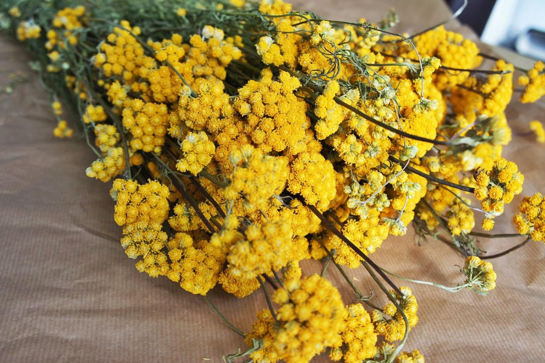 lonas flor montn un montn de lonas secas arreglos florales centros de mesa de flores flores secas