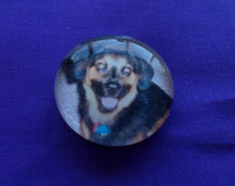 Personalized Glass Gem Magnet - Put your Pet under glass.