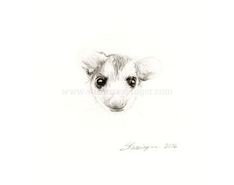 Possum Head Original Drawing
