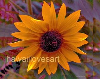 Sunflower Hawaii art throw pillow cover -  sunflower photograph